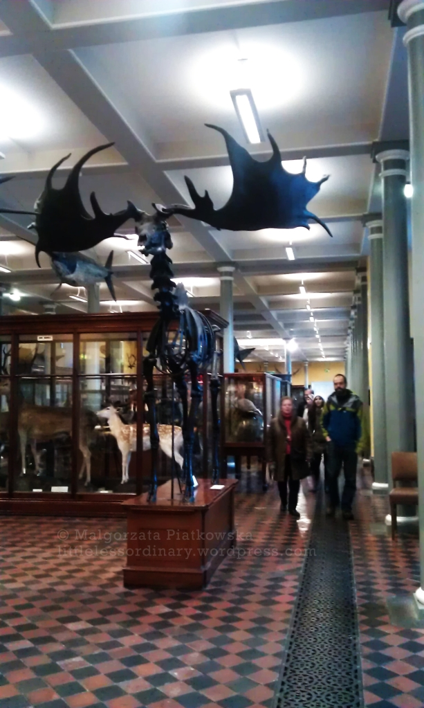Museum of Natural History, Merrion sq.
